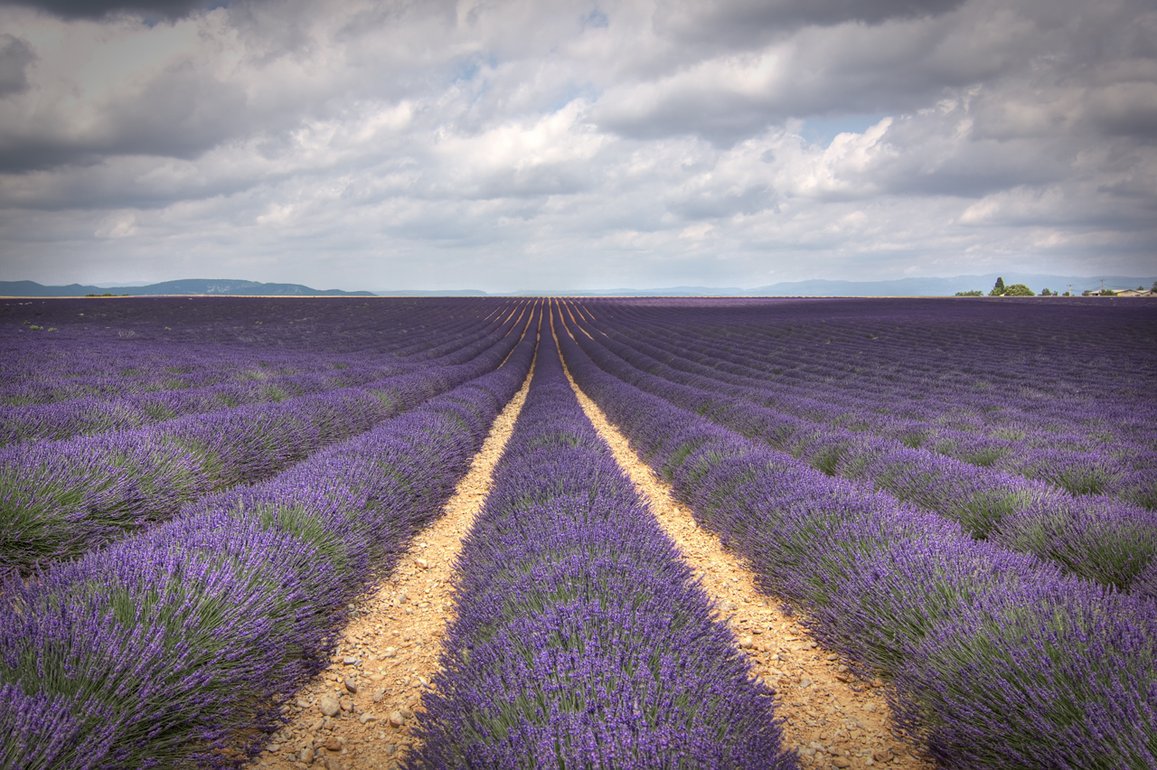Lavender_stripes_somewhere_between_Valensole_and_Moustiers-Sainte-Marie_-_Provence,_France_-_30_June_2014